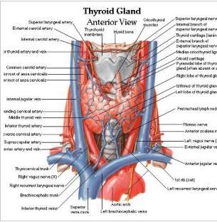 glanda tiroida simptome la femei